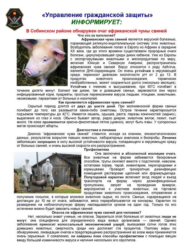 Оперативный штаб по предупреждению распространения африканской чумы свиней на территории белореченского района